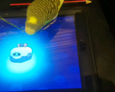 Birb does box opening